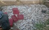 ورود مواد شیمیایی به سراب ماراب شهرستان سرپل ذهاب/ مرگ 12 تن ماهی قزل آلا سردابی مر