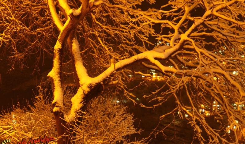 تصاویری از یک شب برفی در شهرستان پاوه